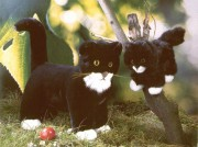 Katzen stehend