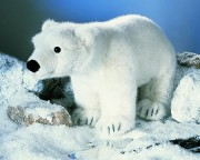 Eisbär Olaf  stehend 3250 Fa. Kösen 51 cm Plüschtier