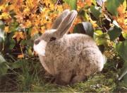 hockendes Kaninchen