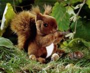 kleines Eichhörnchen