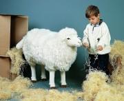 Schaf von Kösen