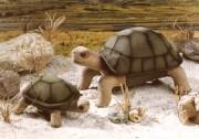 Schildkröten Olga und Olli
