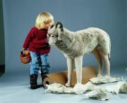 Wolf von Kösen