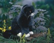 kleine sitzende Katze