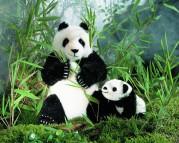 Pandababy von Kösen