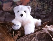 """Eisbärbaby """"Nurri"""" von Kösen"""
