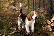 Beagle-7150-ko