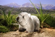 Wombat-Kind-6990-ko
