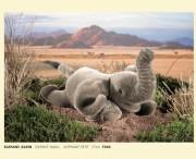 Elefant , klein, liegend, Firma Kösen, 7540, Elefant small, Elephant , Petit, 27 cm
