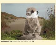 Erdmännchen , Baby, Fa. Kösen, 7480, Meerkat, Baby, Bebe, Suricate, 21 cm , 7480