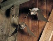 Plüschtier Fledermaus Hellbraun Fa. Kösen Artikel Nr. 3441