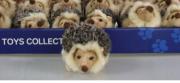 Uni-Toys Igel 10151 Hedgehog Erizo Puppenstube im Nikolaiviertel