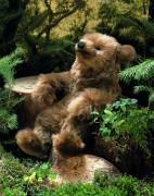 "Bär ""Molli"" von Kösen"