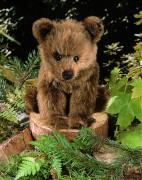 """Bär """"Holly"""" sitzend von Kösen"""