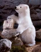 """Eisbär """"Schmuddel"""" von Kösen"""
