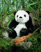 Pandababy-5110-Kösen